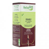 HerbalGem erable bio 30ml